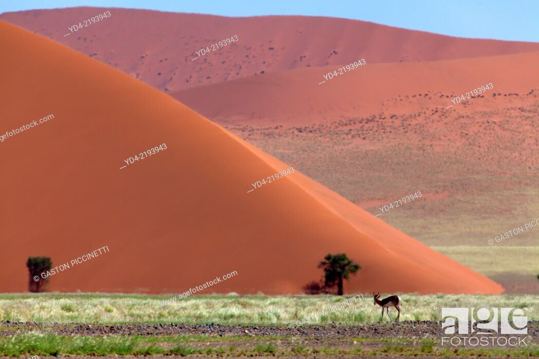 Stock Photo: Beautifull colours in the desert after the rain, Namib-Naukluft National Park, namib desert, Namibia.