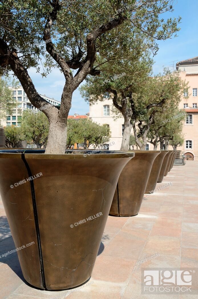 Stock Photo: Row of Giant Planters or Flower Pots with Olive Trees Marseille France.