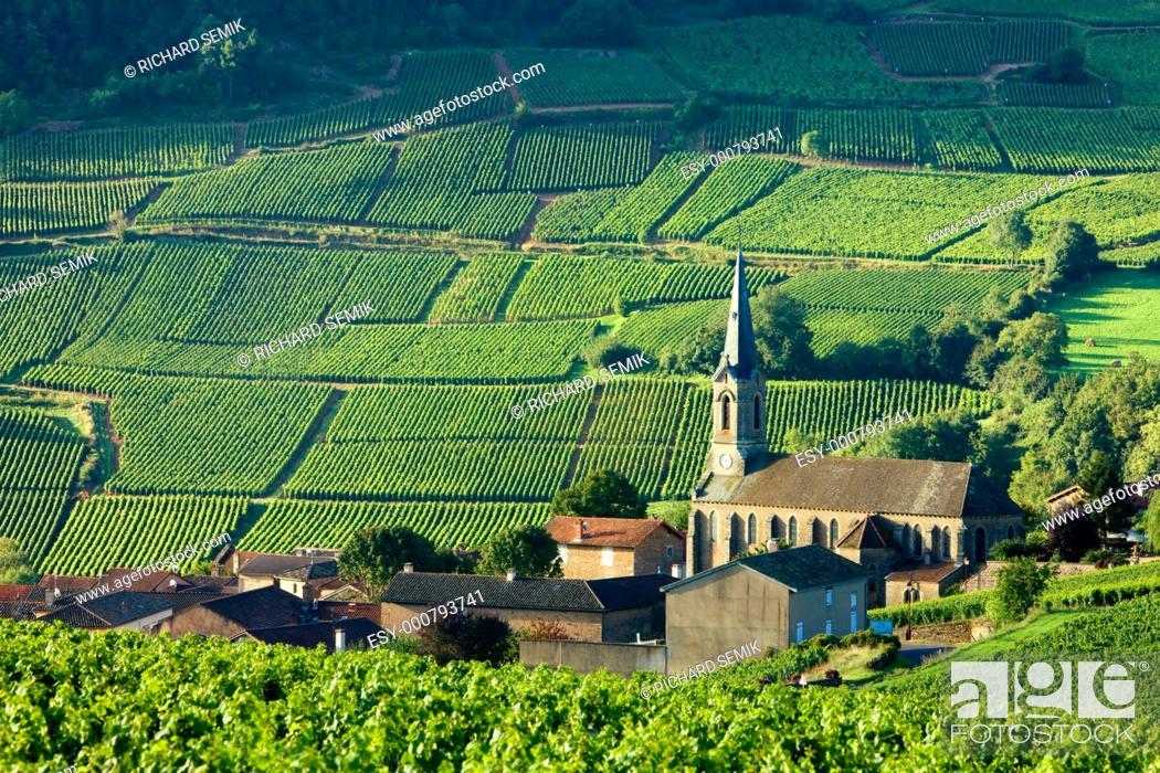 Stock Photo: Vergisson with vineyards, Burgundy, France.