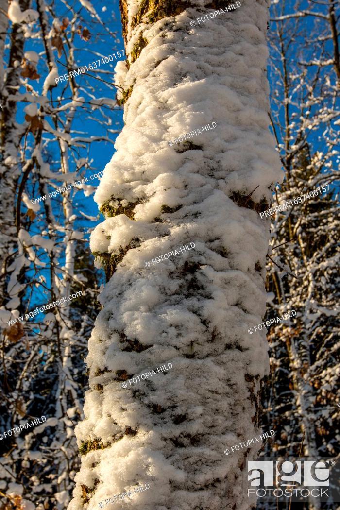 Stock Photo: Winter at the Bramwald, Göttingen district, Lower Saxony, Germany / Winter im Bramwald, Landkreis Göttingen, Niedersachsen, Deutschland.