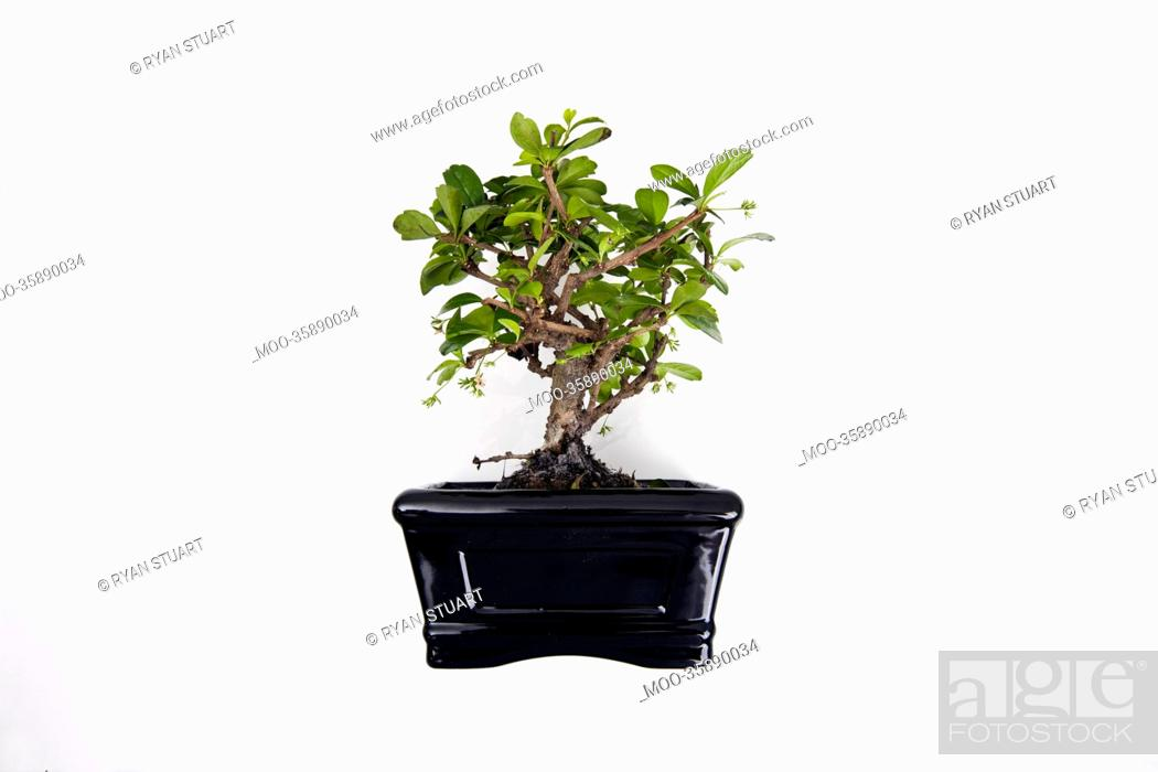 Stock Photo: Potted plant over white background.