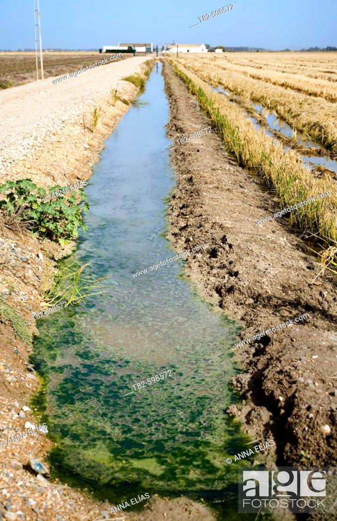 Stock Photo: Rice fields. Isla Mayor, Sevilla province, Andalusia, Spain.