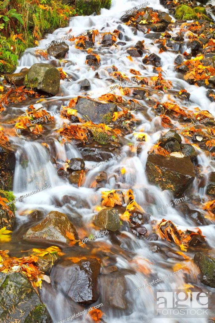Stock Photo: water cascading over rocks covered in leaves in autumn.