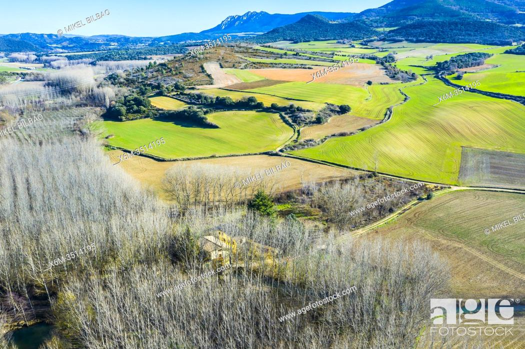 Stock Photo: Agricultural area and poplar grove. Aerial view. Ancin area. Navarre, Spain, Europe.