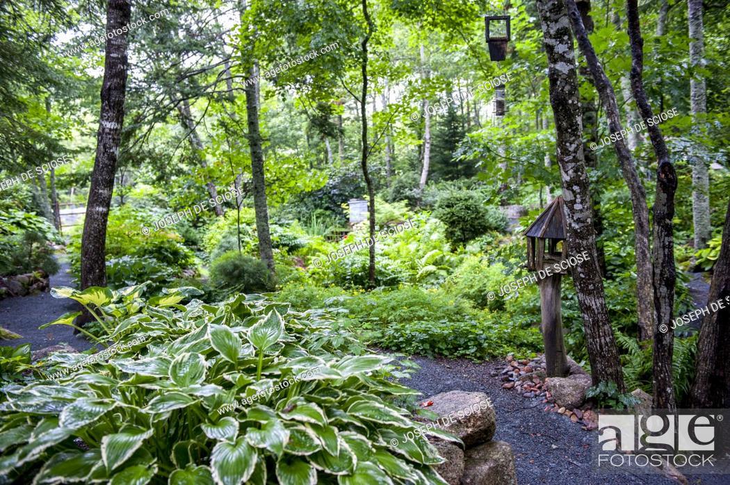 A Path Through A Shade Garden Featuring A Stone Wall A Bird Feeder
