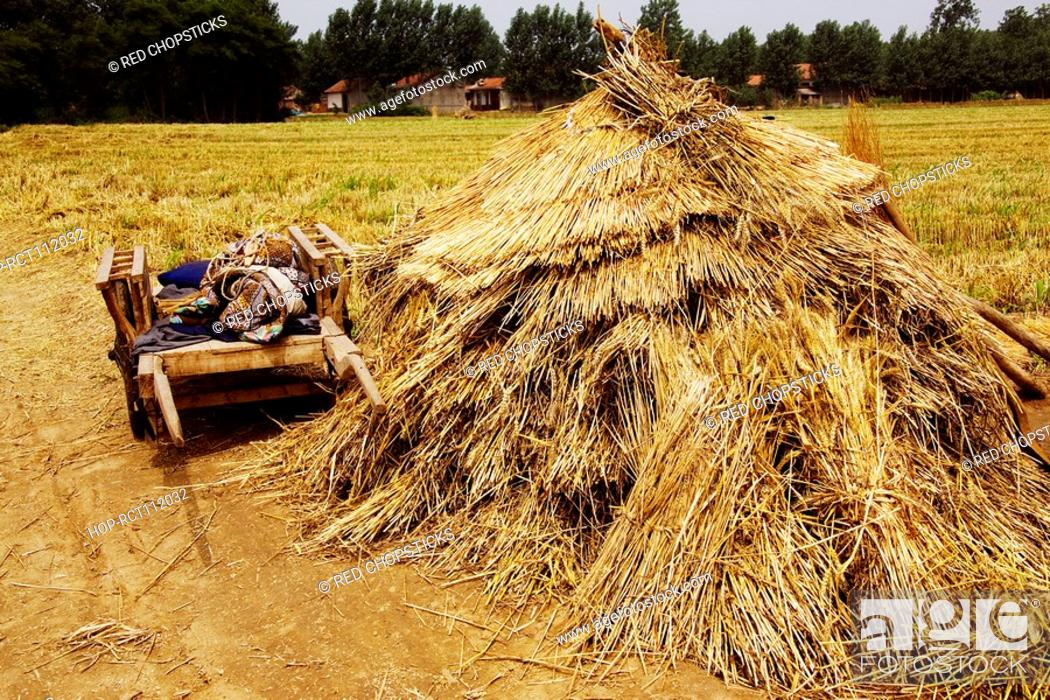 Stock Photo: Cart near a haystack in a field, Zhigou, Shandong Province, China.