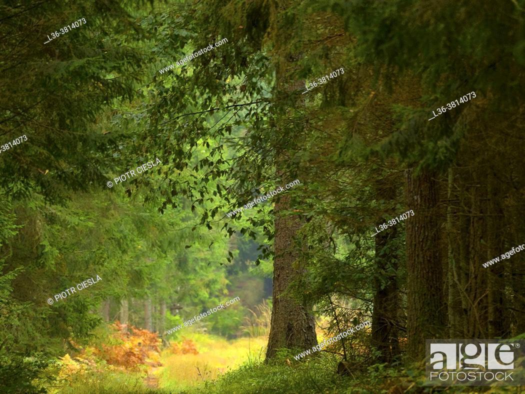 Stock Photo: Poland. Podlasie Region. Bialowieza National Park.