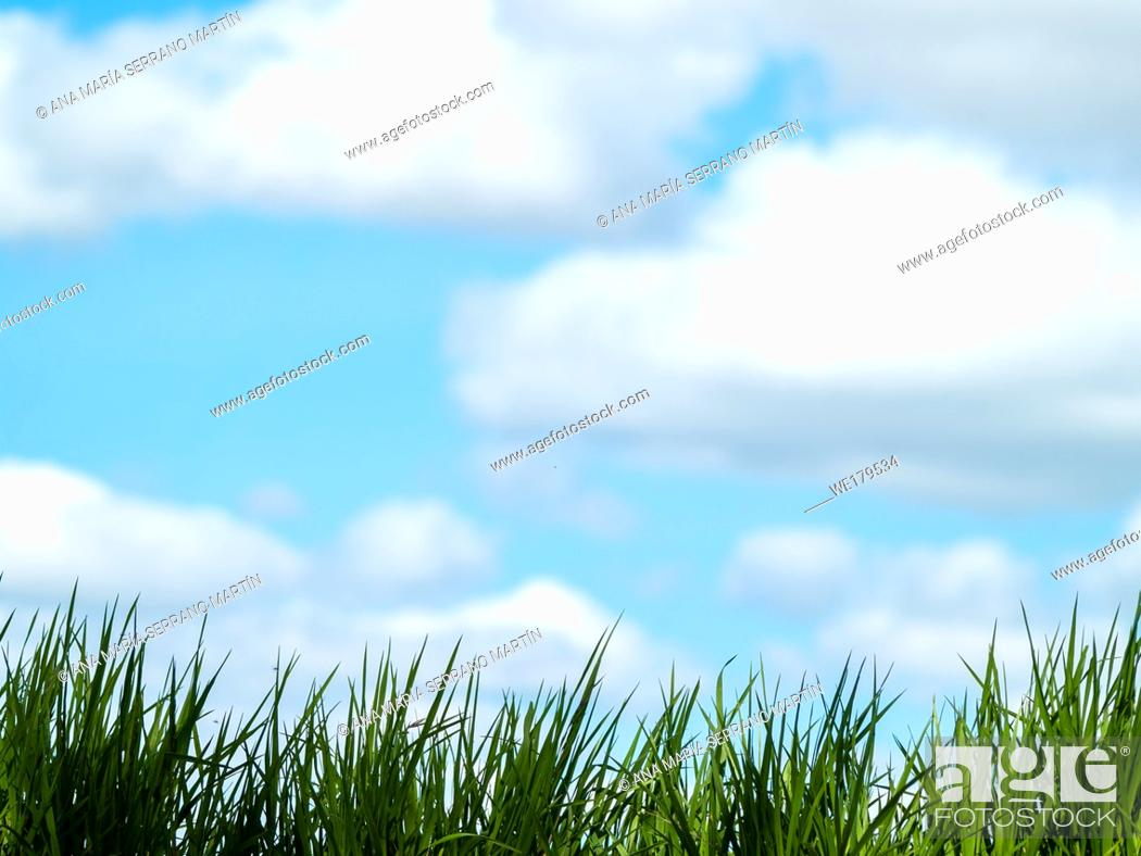 Imagen: Green grass in spring with sky and clouds background.