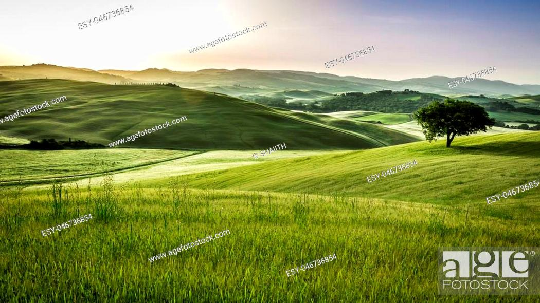 Stock Photo: Sunrise over the green fields in Tuscany.