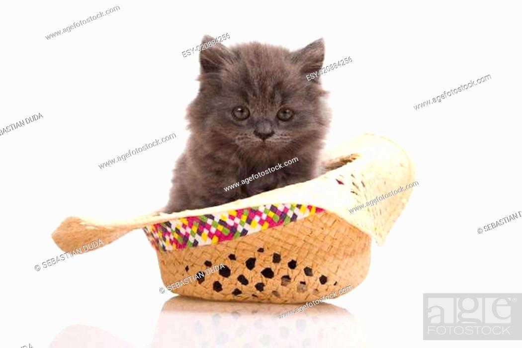 Stock Photo: Small gray kitten.