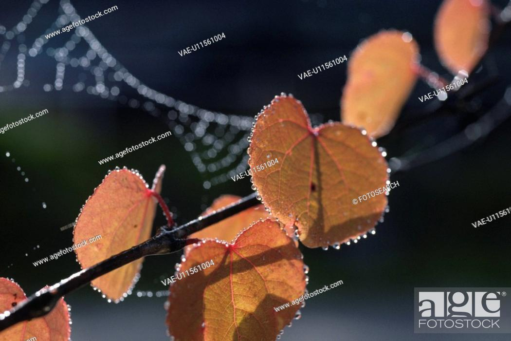 Stock Photo: Autumn Leaves And Waterdrop.