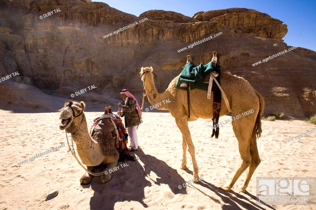 Stock Photo: Photograph of camels in the Jordanian desert.