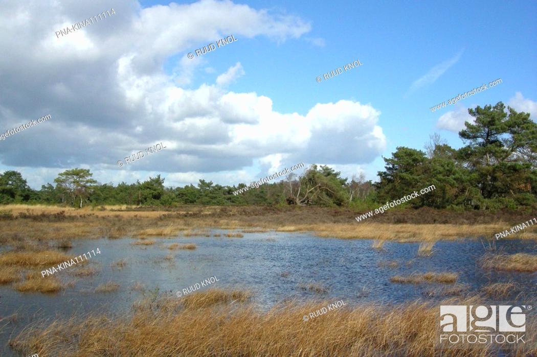 Stock Photo: Tongerense Heide, Epe, Veluwe, Guelders, The Netherlands, Holland, Europe.