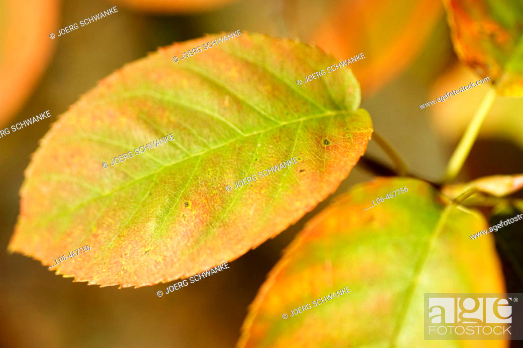 Stock Photo: Coloured leaves.