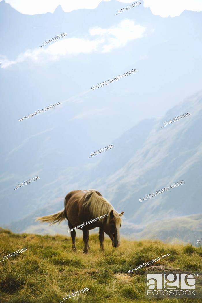 Stock Photo: A horse from the Pyrenees. This shot was taked in the spanish part of the Pyrenees, in Formigal area.
