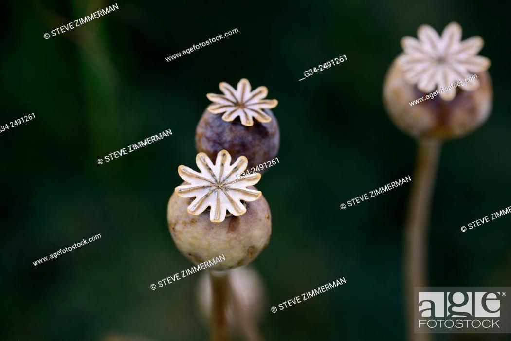 Stock Photo: Prior Bloom.
