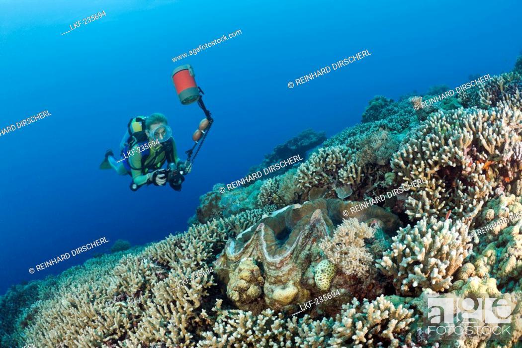 Stock Photo: Diver and Giant Clam, Tridacna Squamosa, Micronesia, Palau.