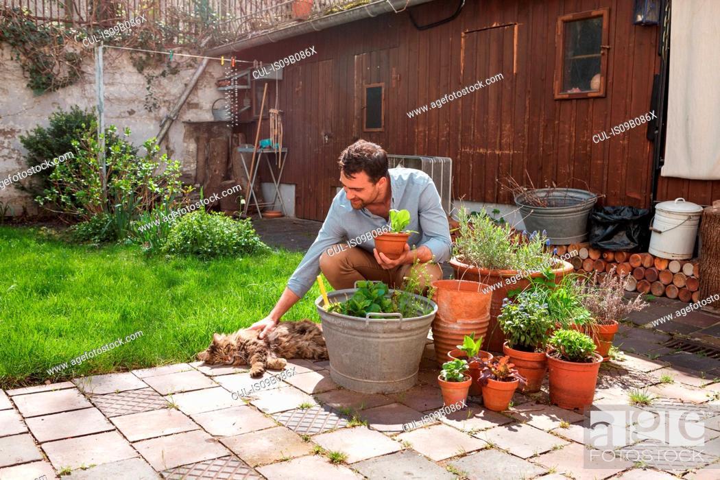 Stock Photo: Man in garden tending to plants.