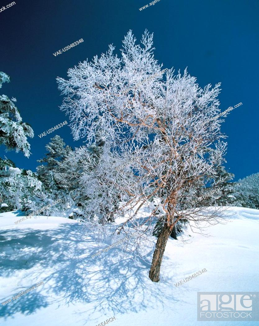 Stock Photo: scenic, scenery, snow, winter, landscape, forest, nature.