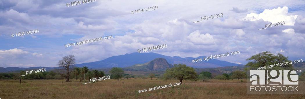 Stock Photo: Grass Savanna Guanacaste Province Costa Rica.