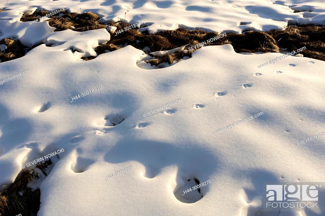 Imagen: Wintersport, Skigebiet, Skifahren, Schneemangel. Riederalp Schweiz Wallis Mittwoch 21. Dezember 2016.