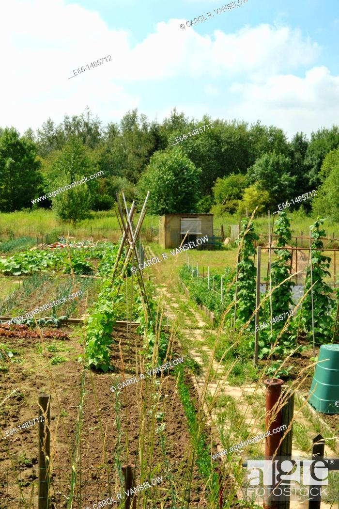 Stock Photo: community garden in Heerlen, in Limburg province of the Netherlands.