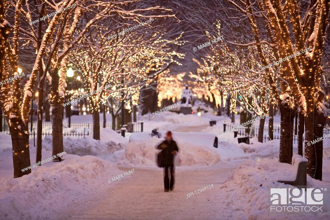 Photo de stock: Decorated trees along an avenue in winter, Commonwealth Avenue, Boston, Massachusetts, USA.