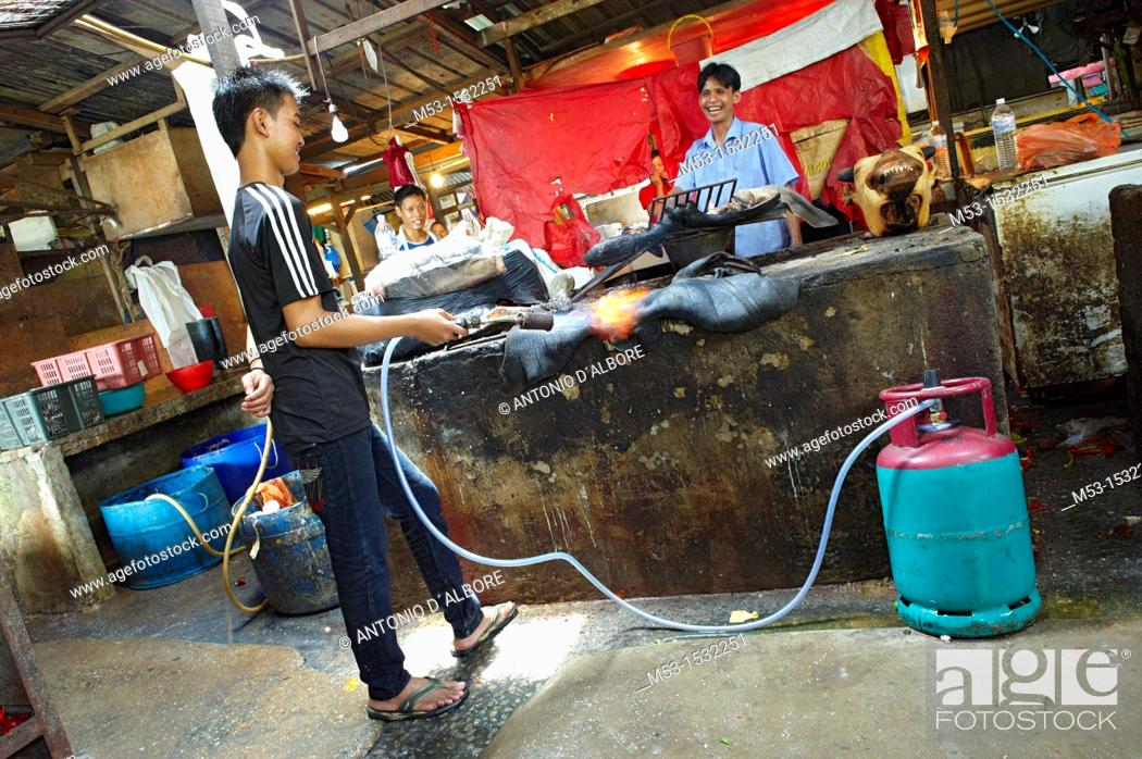 Stock Photo: A young man burning cow skin with a gas burner  The skin is later cleaned from burned pieces and sold as ingredient for soup and other Malay recipes  Kuala.