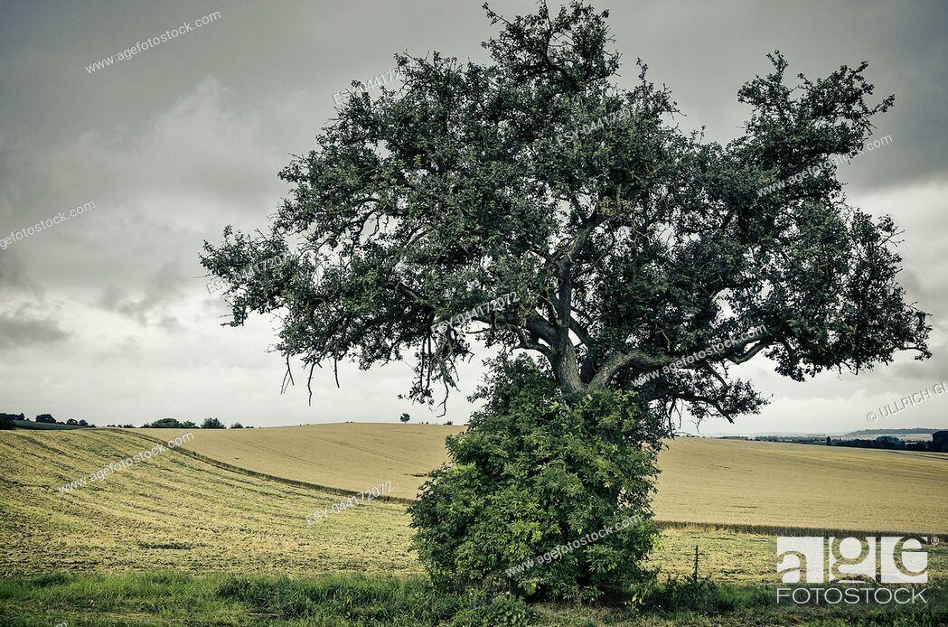 Stock Photo: Einzelner Baum in Ackerlandschaft bei Gewitterstimmung. Solitary tree in rural environment in a thundercloud setting.