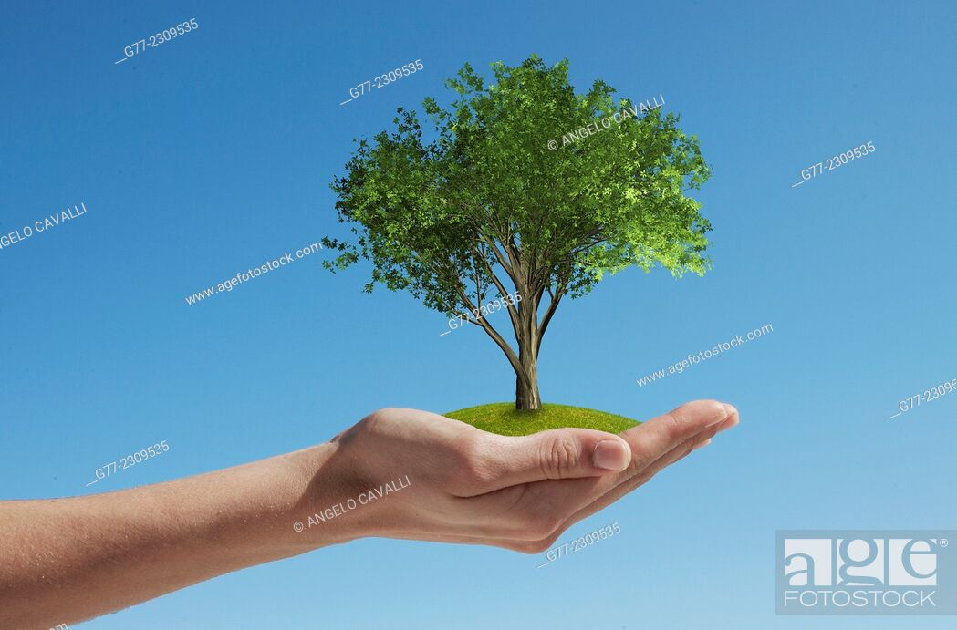 Stock Photo: Woman's hand holding a tree.