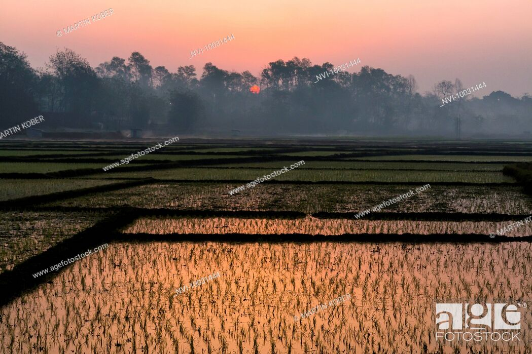 Stock Photo: Sunrise over the rice fields in Terai, Nepal.