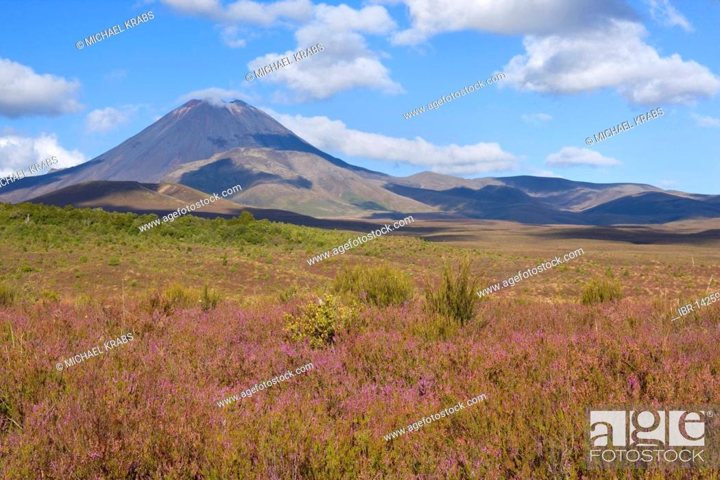 Stock Photo: Mount Ngauruhoe volcano rises out of the blooming, heather-covered plain, Tongariro National Park, North Island, New Zealand.