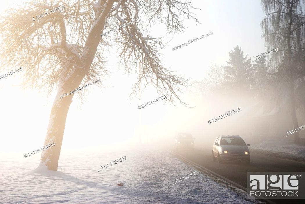 Stock Photo: Cars in the winter fog.