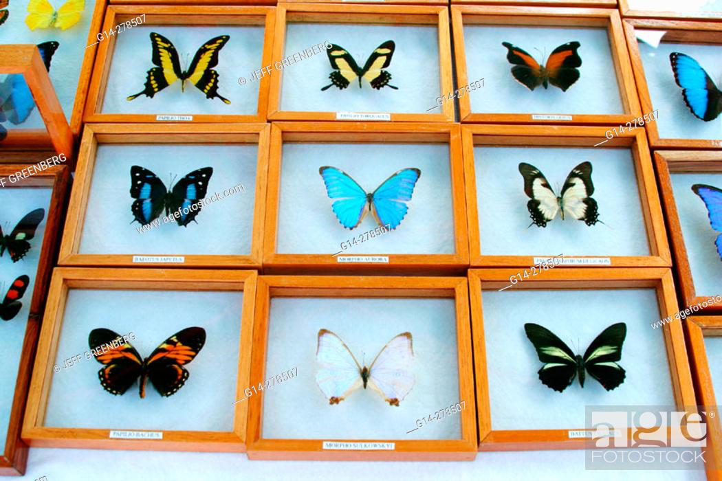 Stock Photo Erflies From South America For Flea Market Miami Beach