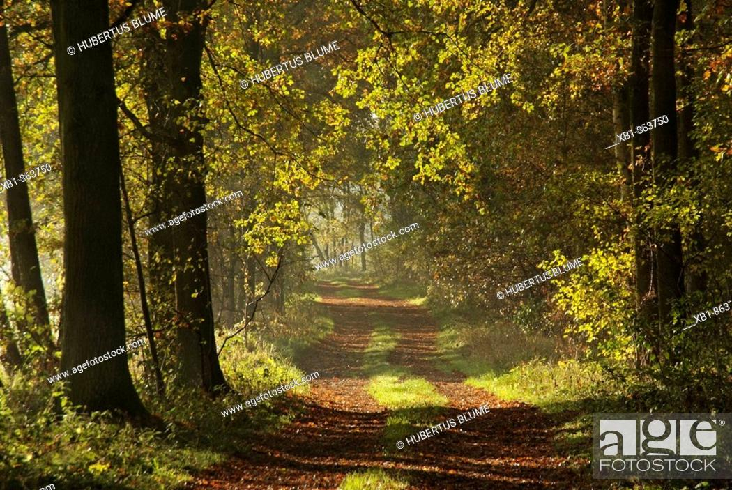 Stock Photo: Forest cart road in autumn.
