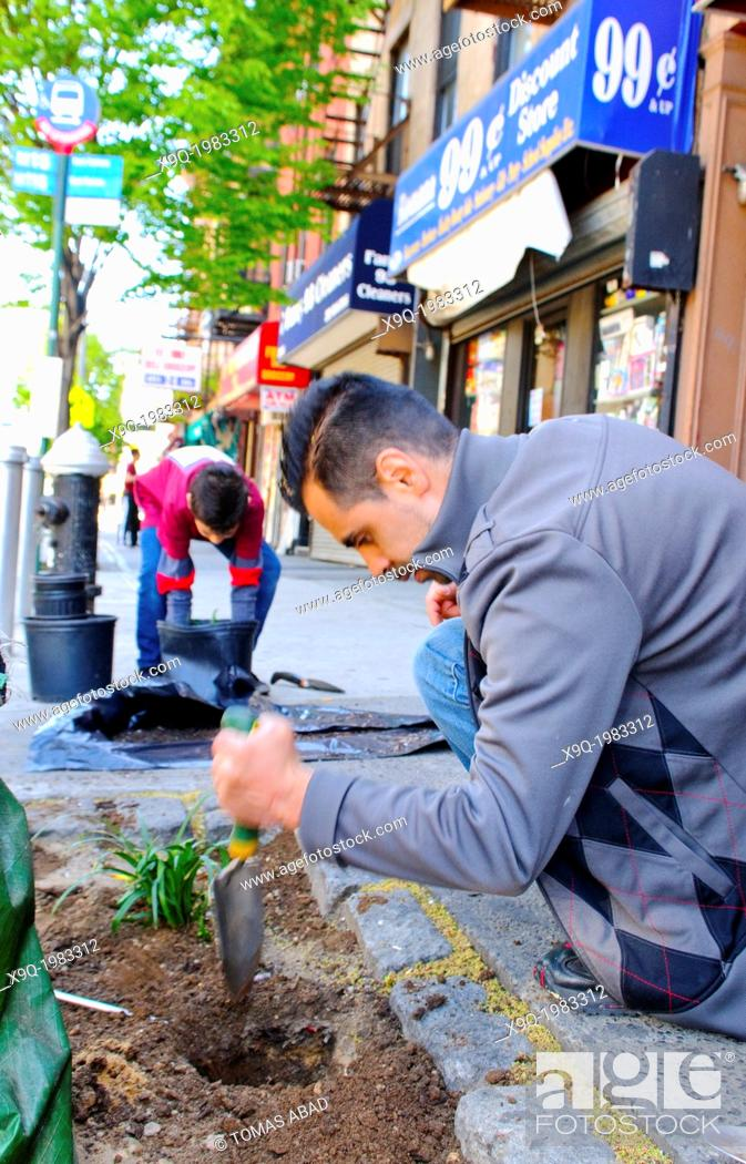 Stock Photo: Father and son planting on a city street. Hispanic community service volunteers of the Harlem Spanish Manhattan Seventh Day Adventist Church plant flowers in an.