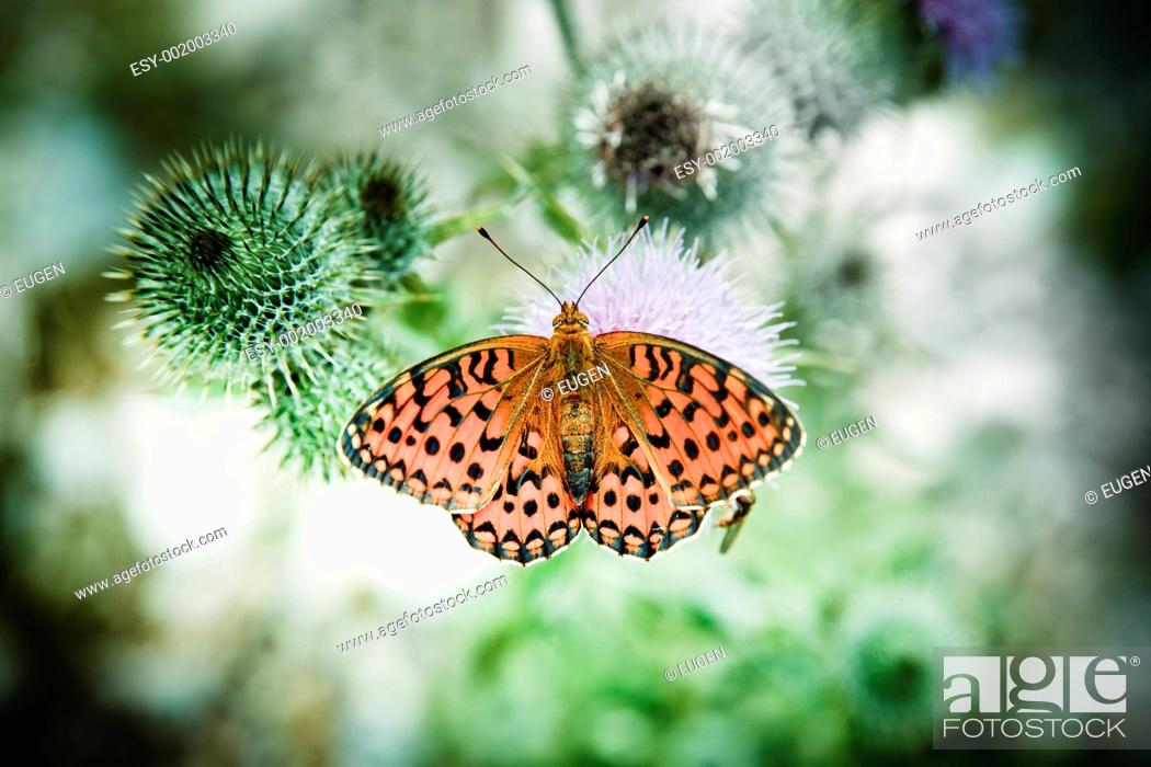 Stock Photo: butterfly poised on flower.