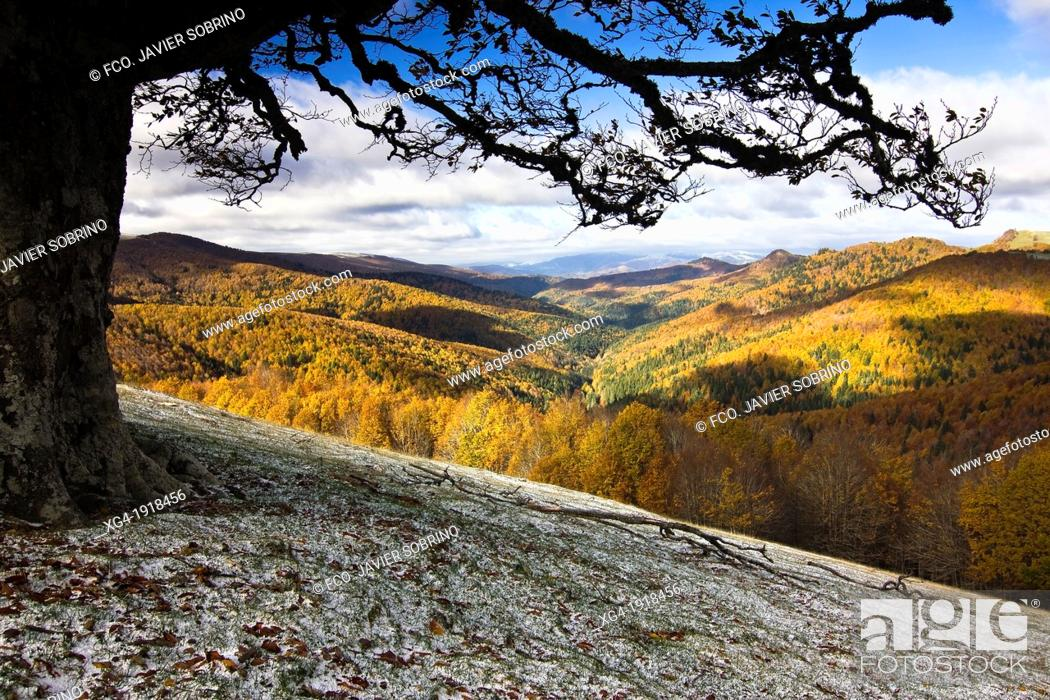 Stock Photo: Irati forest in autumn from the Ollokia hill - Navarre Pyrenees - Navarra - Spain - Europe.