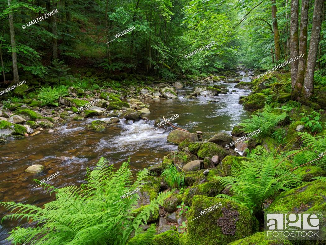 Photo de stock: Valley of river Wolfsteiner Ohe (Buchberger Leite) in the Bavarian Forest. Europe, Germany, Bavaria.
