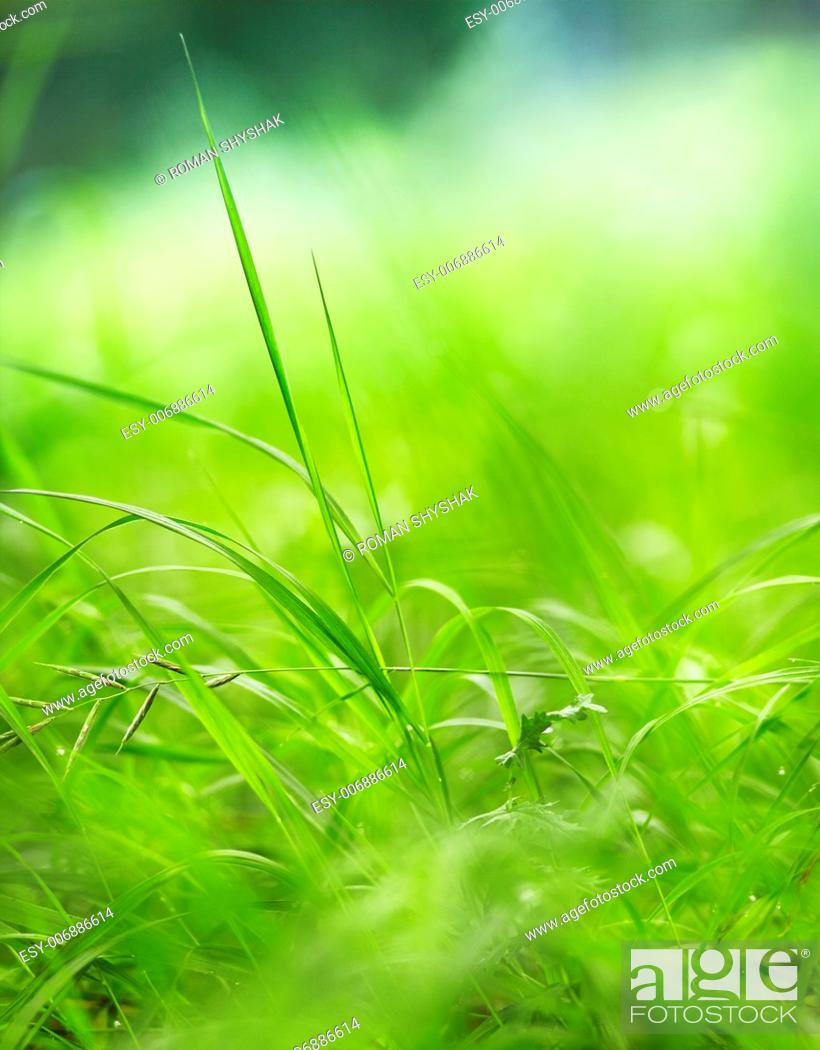 Stock Photo: Green grass on a beautiful day. Shallow depth of field.