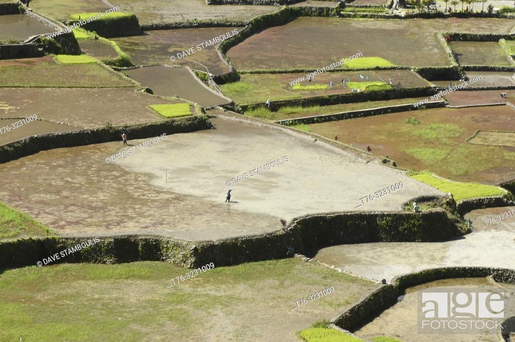 Stock Photo: The beautiful UNESCO rice terraces in Hapao, Banaue, Mountain Province, Philippines.