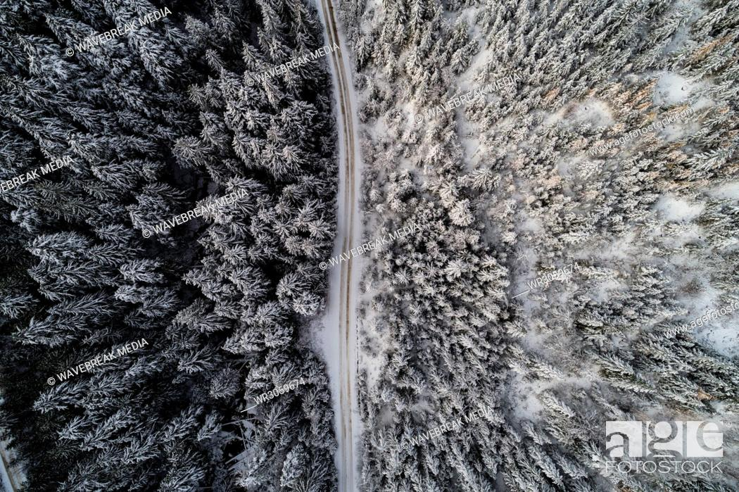 Stock Photo: Road passing through snow covered forest.
