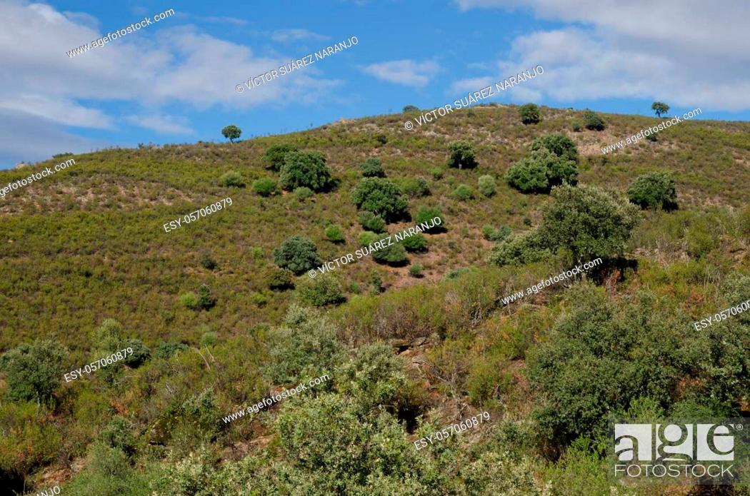 Photo de stock: Landscape in the Monfrague National Park. Caceres. Extremadura. Spain.