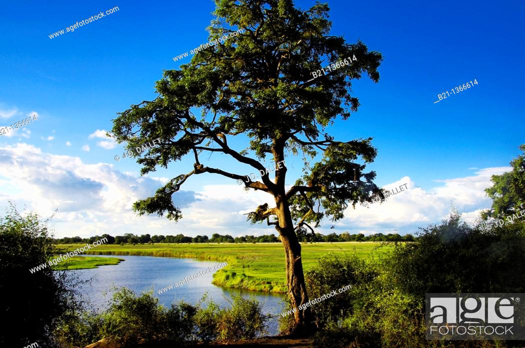 Stock Photo: Chobe river between Namibia and Botswana, Chobe National Park.