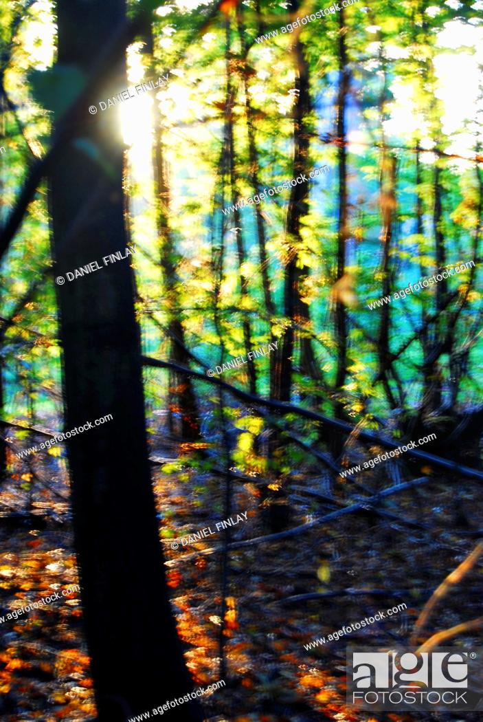 Stock Photo: Autumn / Fall in Mad Bess Wood, Ruislip, Greater London, England.