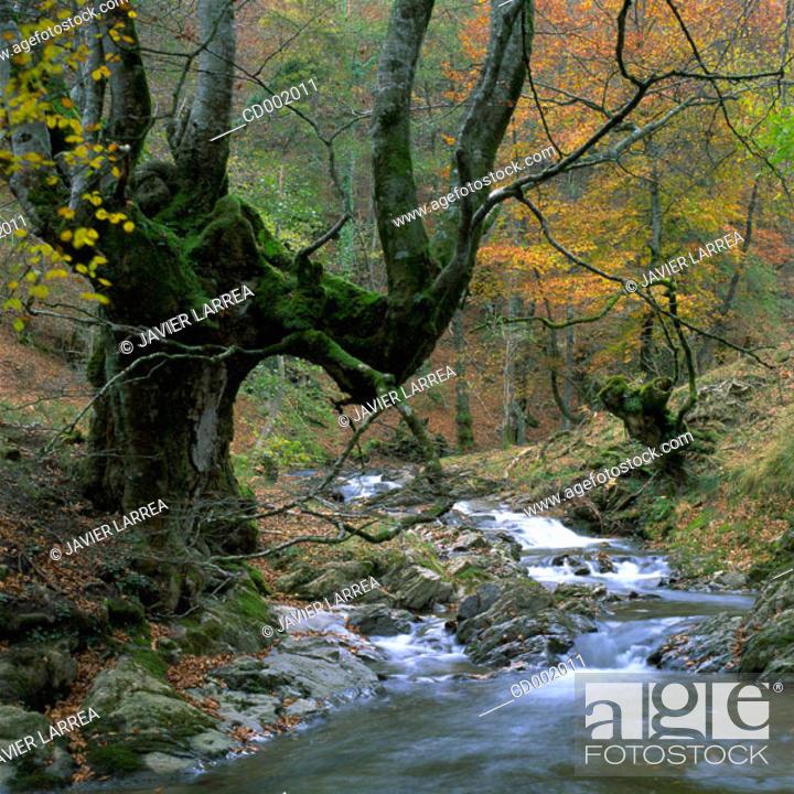 Stock Photo: Alzania River. Otzaurte. Guipúzcoa. Spain.