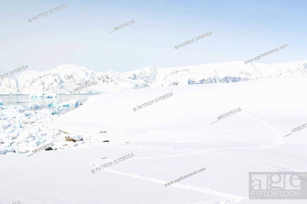 Imagen: Antarctica, country tour on the continent of Antarctica - footprints in the snow.