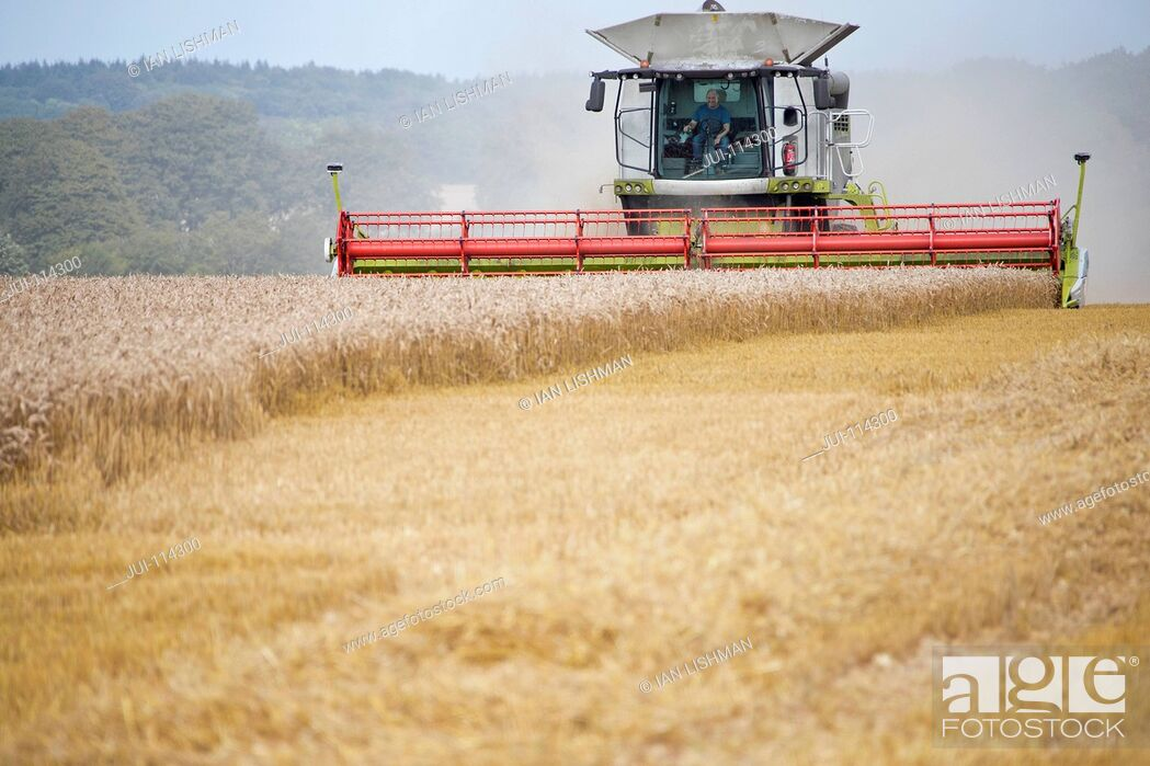 Stock Photo: Front View Of Combine Harvester Harvesting Wheat Crop.