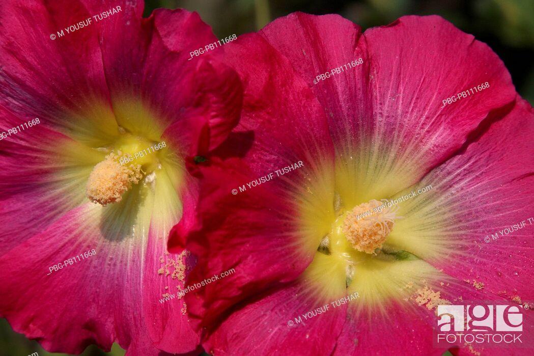 Imagen: Flower at Ramna Park Dhaka, Bangladesh March 2011.