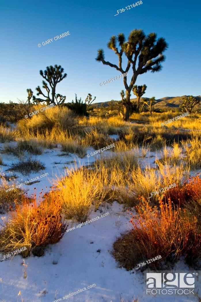 Rare Winter Snowfall On Desert Floor Joshua Tree National